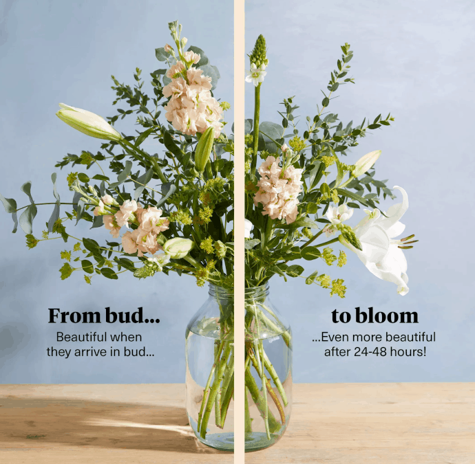 flower comparison: in bud to bloom
